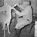 Jonge Guanaco (wilde lama) verstoten door moeder in Artis, Bestanddeelnr 914-7784.jpg
