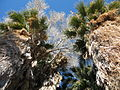 Joshua Tree National Park - Cottonwood Spring Oasis - 02.jpg