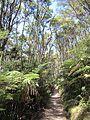Kānuka & fern grove (6706316887).jpg