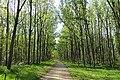 Kaćka šuma - panoramio.jpg
