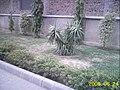 Kalsoom Social Security Hospital, Allama Iqbal Road, Okara - panoramio - Sunni Person (4).jpg
