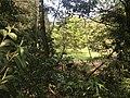 Kasuya Research Forest of Kyushu University 22.jpg