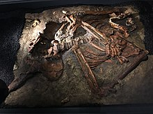 A disarticulated skeleton embedded in a stone slab