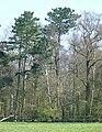 Keeper's Wood, Hilton Park, Staffordshire - geograph.org.uk - 391713.jpg