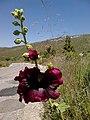 Kifisia, Greece - panoramio (28).jpg
