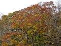 Kimigahatacho, Higashiomi, Shiga Prefecture 527-0202, Japan - panoramio (26).jpg