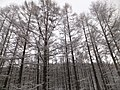Kiyomicho Kamiodori, Takayama, Gifu Prefecture 506-0206, Japan - panoramio (2).jpg
