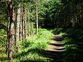Klosnowo Drzewicz way.jpg