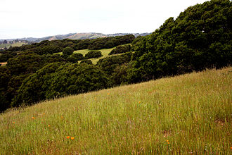 Joseph Knowland State Arboretum and Park - Western Knolls of Knowland Park