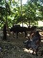 Kodinar, Gujarat - India (3417891708).jpg
