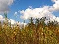 Kolomyya, Ivano-Frankivs'ka oblast, Ukraine - panoramio (7).jpg
