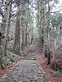 Kumano Kodo pilgrimage route Daimon-zaka World heritage 熊野古道 大門坂40.JPG