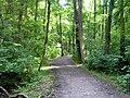 Kunratický Forest south 2, Prague Kunratice.jpg