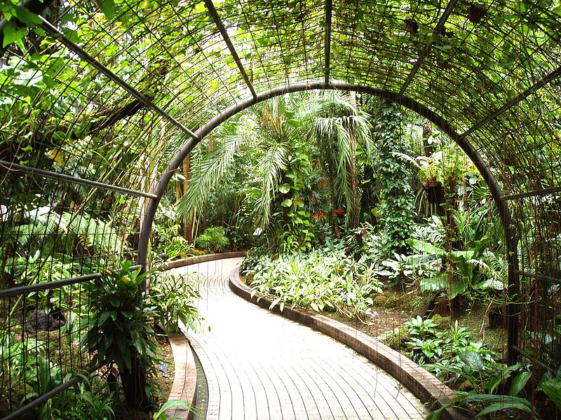 File Kyoto Botanical Garden Inside Conservatory Jpg Wikimedia Commons