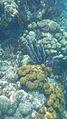 Laika ac Coral (7174366479).jpg