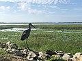 Lake Tohopekaliga in Kissimmee - Eric Statzer.jpg