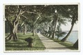 Lake Worth through Coconut Trees, Palm Beach, Fla (NYPL b12647398-75639).tiff