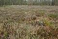 Landschap De Stroopers te Kemzeke - 371933 - onroerenderfgoed.jpg