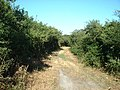 Lane at Meyllteyrn - geograph.org.uk - 210461.jpg