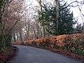 Lane near Cowden - geograph.org.uk - 1140306.jpg