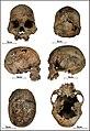 Lapa do Santo - Sepultamento 21 - Cranio.jpg