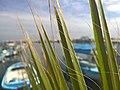 Larnaca psarolimano - panoramio.jpg