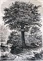 """Les merveilles de l'industrie, 1873 """"Chêne"""" (4724277450).jpg"""