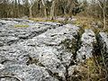Limestone Pavement, Township Plantation - geograph.org.uk - 362181.jpg