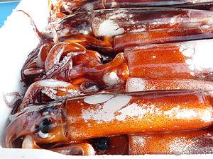 Squid as food - Squid