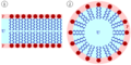Lipid bilayer and micelle.png