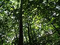 Loantaka Brook Reservation bikeway looking up at trees and sunlight.jpg