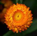 Look Down! V (Hong Kong-NATURE) (1468284916).jpg