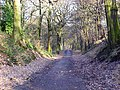 Looking downhill in Middleton Woods - geograph.org.uk - 830830.jpg