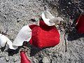 Lori Wilson Park - Cocoa Beach FL - Flickr - Rusty Clark (25).jpg