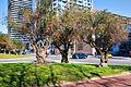 Los Tres Olivos (3410705290).jpg