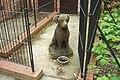 Low maintenance dog - panoramio.jpg
