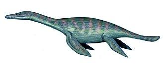 Pliosauroidea - Macroplata