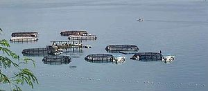 Maitum, Sarangani - Maitum aqua-culture fish cages