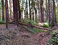 Malahide Castle Woods Bokehrama (30mm f 0.4) (6956892589).jpg