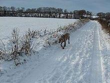 Image Result For Scent Tracking Dog