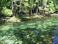 Manatee Springs State Park Florida outlet03.jpg
