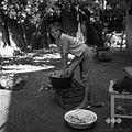 Marjana Kramar pri pranju, Mirna 1961.jpg