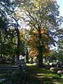 Marosvásárhelyi ref. temető.jpg