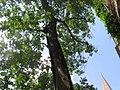 Medieval garden (Perugia) 32.jpg