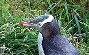 mi a pingvinek látványa