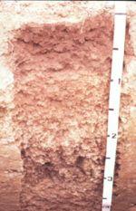 Miami soil