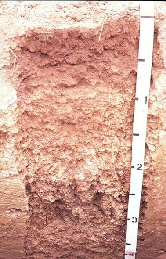 Miami (soil) - Miami soil profile