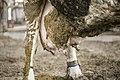 Milk industry 06.jpg