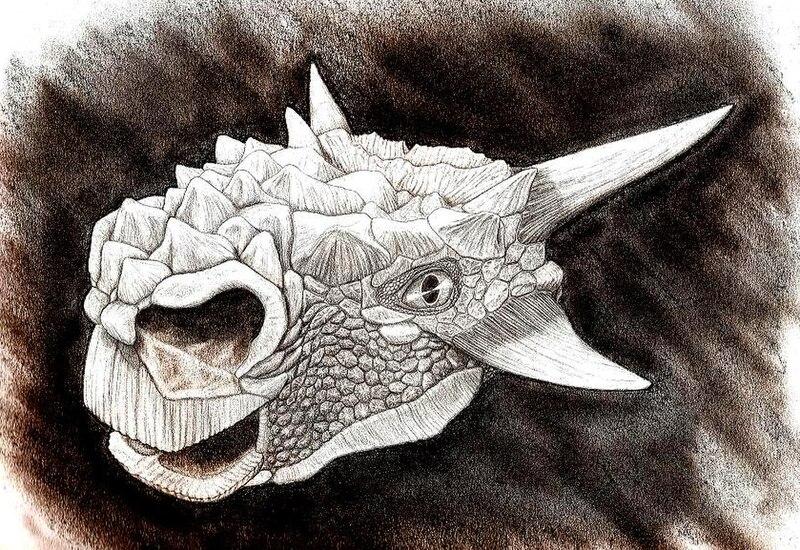 File:Minotaurasaurus.jpg