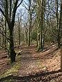 Miterdale Forest - geograph.org.uk - 761635.jpg